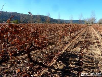 Ribera del Duero,visita enológica-Peñafiel; clubes de senderismo madrid federacion madrileña de m